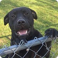 Adopt A Pet :: Titan - Blountstown, FL