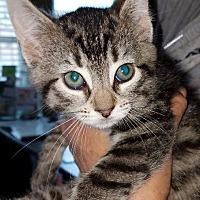 Adopt A Pet :: Laura - Freeport, NY