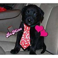 Adopt A Pet :: Whiskey - Windham, NH