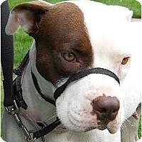 Adopt A Pet :: Annie - Kingwood, TX