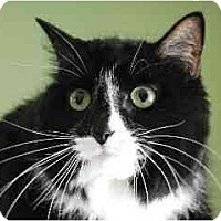 Adopt A Pet :: Chloe - Port Republic, MD
