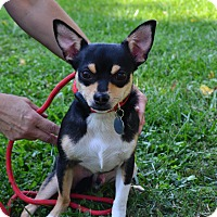 Adopt A Pet :: Wally~Adopted! - Troy, OH