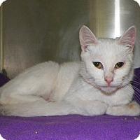 Adopt A Pet :: Cori - Dover, OH