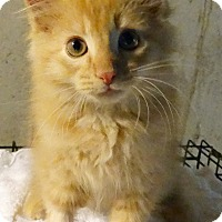 Adopt A Pet :: The Oranges---Valencio - Florence, KY