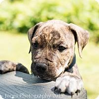 Adopt A Pet :: Jerry - Acushnet, MA