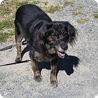 Adopt A Pet :: Dexter - Cuddebackville, NY