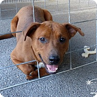 Adopt A Pet :: Mater--RESCUED! - Marlinton, WV