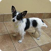 Adopt A Pet :: Sophia *Petsmart GB* - Appleton, WI