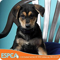 Adopt A Pet :: AnnaBelle - Enid, OK