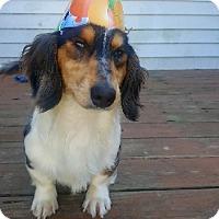 Adopt A Pet :: Brody - Taunton, MA