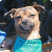 Adopt A Pet :: Nick-PENDING - Garfield Heights, OH