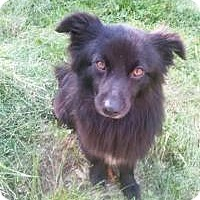 Adopt A Pet :: PEANUIT - Sugar Land, TX