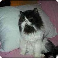 Adopt A Pet :: Prada - Columbus, OH