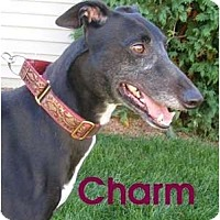 Adopt A Pet :: Charm - Fremont, OH