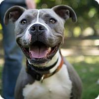 Adopt A Pet :: CALLIE - Ojai, CA