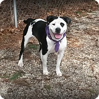 Adopt A Pet :: Talia - Muskegon, MI