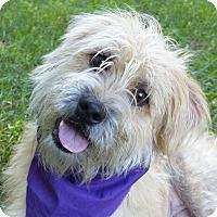 Adopt A Pet :: Norman - Mocksville, NC
