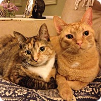 Adopt A Pet :: Otis and Penny - Novato, CA