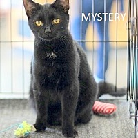 Adopt A Pet :: Mystery - Concord, NC