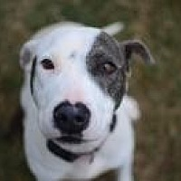 Adopt A Pet :: Jamie - Chattanooga, TN