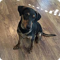 Adopt A Pet :: ASH - Beaumont, TX