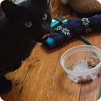 Adopt A Pet :: Lilith - Somerville, MA