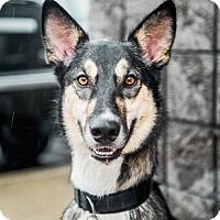 Adopt A Pet :: Denali Park - Salt Lake City, UT
