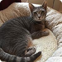Adopt A Pet :: Spirit - Wayne, NJ