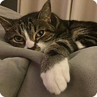 Adopt A Pet :: Faye - Sherman Oaks, CA