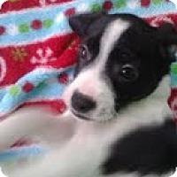 Adopt A Pet :: Moby - Brattleboro, VT