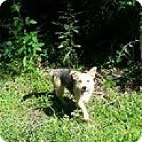Adopt A Pet :: Rhea - Staunton, VA