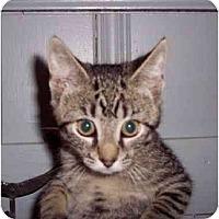 Adopt A Pet :: Dylan - Jenkintown, PA