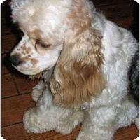 Adopt A Pet :: Hugh - Sugarland, TX