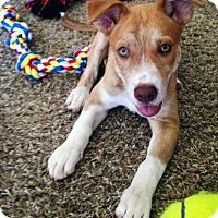 Adopt A Pet :: Marla - Seattle, WA