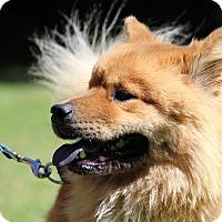 Adopt A Pet :: Maryella - Tucker, GA