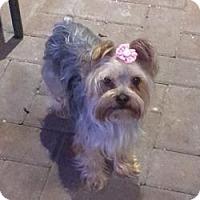 Adopt A Pet :: Coco Bean - Riverview, FL