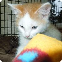 Adopt A Pet :: Lieutenant Dan - Medina, OH