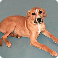 Adopt A Pet :: Sam - Lufkin, TX