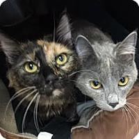 Adopt A Pet :: Georgia and Peaches - Fairfax, VA