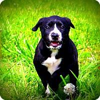 Adopt A Pet :: Baby Daisy - Glastonbury, CT