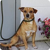 Adopt A Pet :: Dozer - Spring Valley, NY