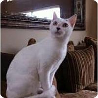 Adopt A Pet :: Isabella - Fort Lauderdale, FL