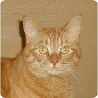 Adopt A Pet :: Tabitha - Elmira, ON