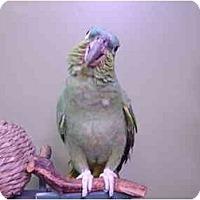 Adopt A Pet :: Rudie - Redlands, CA