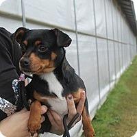 Adopt A Pet :: Julia - Marlton, NJ
