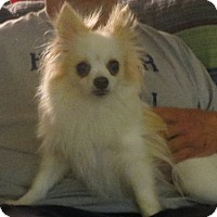 Adopt A Pet :: Mia - Greenville, RI