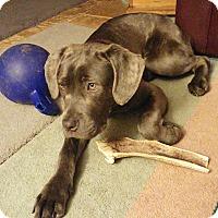 Adopt A Pet :: BOWIE - Oswego, IL