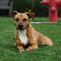 Adopt A Pet :: Olivia - Stockton, CA
