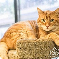 Adopt A Pet :: PAXTON - Irvine, CA