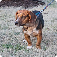 Adopt A Pet :: Cabella - Columbia, TN